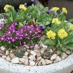растения для альпинарий